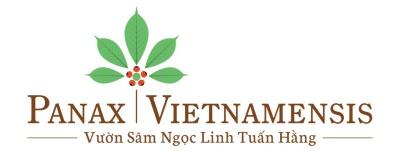 Vườn Sâm Ngọc Linh Tuấn Hằng